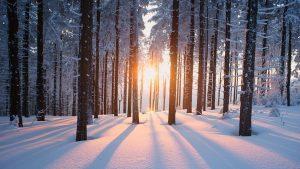 preparation-hiver